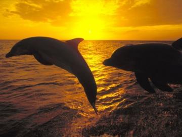 """""""Ένα και δύο: τη μοίρα του ήλιου θα την πούμε εμείς"""""""